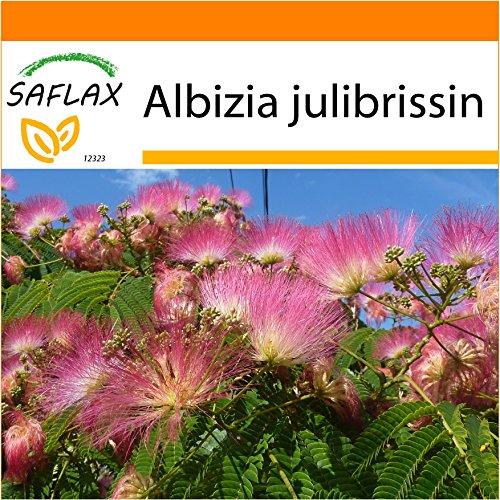 SAFLAX - Jardin dans le sac - Albizia - 50 graines - Albizia julibrissin