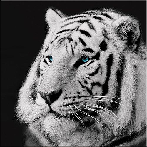 artissimo, Glasbild, 20x20cm, AG1441A, Tiger, schwarz weiß, Bild aus Glas, Moderne Wanddekoration aus Glas, Wandbild Wohnzimmer modern