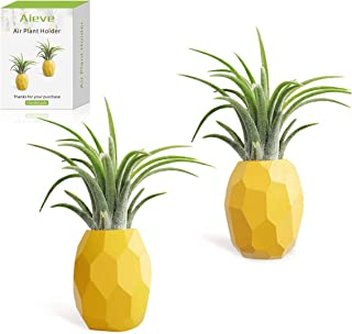 Best pineapple plant holder Reviews