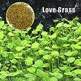 Daxibb semi di piante acquatiche acqua erba acquario Decor Garden Plant in primo piano, Love grass