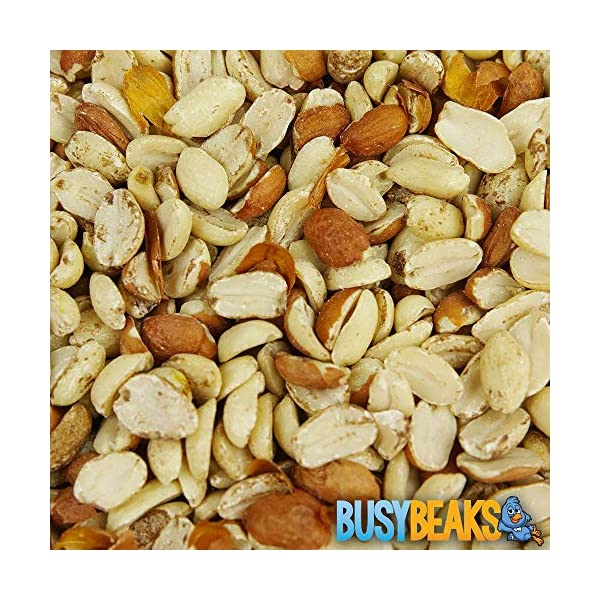 BusyBeaks Split Peanuts | Premium Quality Fresh Feed | Garden Wild Bird Nut Food | Aflatoxin Free Mix | Protein Rich, High in Energy Mixture | Holds Nutritious Vitamins and Essential Oils