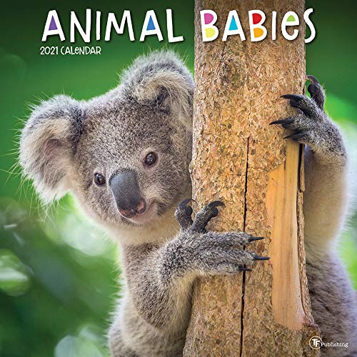 TF PUBLISHING 2021 Animal Babies-Incredibly Cute! Monthly Wall Calendar Appointment Tracker - with Contacts/Notes Page - Home or Office Planning and Organization - Premium Gloss Paper 12'x12'