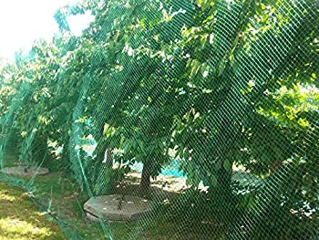 CandyHome Green Anti Bird Protection Net Mesh Garden Plant Netting Protect Seedlings Plants Flowers Fruit Trees Vegetables from Rodents Birds Deer Reusable Fencing  13Ft x 33Ft