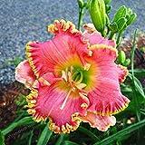 100 unidades por bolsa de semillas híbridas de lirio diurno de bonsái, semillas de flores hemerocallis lirio para interiores, suministros de jardín para el hogar 7