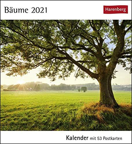 Bäume Postkartenkalender 2021 - Tischkalender mit Wochenkalendarium - 53 perforierte Postkarten zum Heraustrennen - zum Aufstellen oder Aufhängen - Format 12 x 15 cm