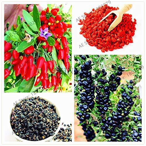 SANHOC 100pcs / Bag Goji-Beere Samen Wolfberry, Bio-Erbstück Fruchtsamen