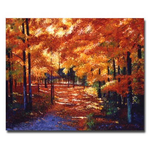 Magical Forest by David Lloyd Glover, 18x24-Inch Canvas Wall Art