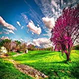 Spring Wallpapers HD