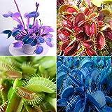 SONIRY Graines Paquet: Vert: 50PcsDionaea Muscipula SeedsSeeds Balcon Bonsai 4 Couleurs