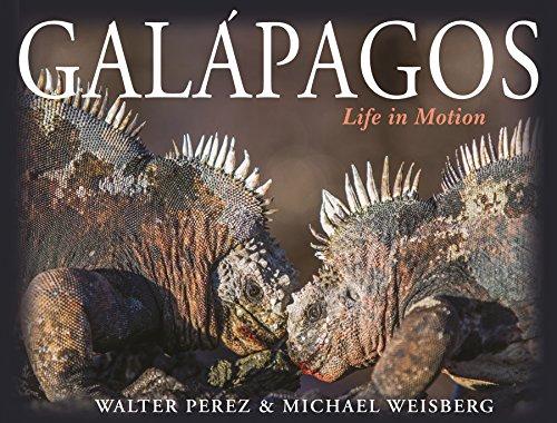 Galapagos: Life in Motion