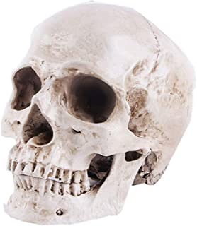 Life Size Replica Realistic Human Skull Head Bone Model, Anatomy White Resin Skull High Precision Teaching Tool Halloween Decor
