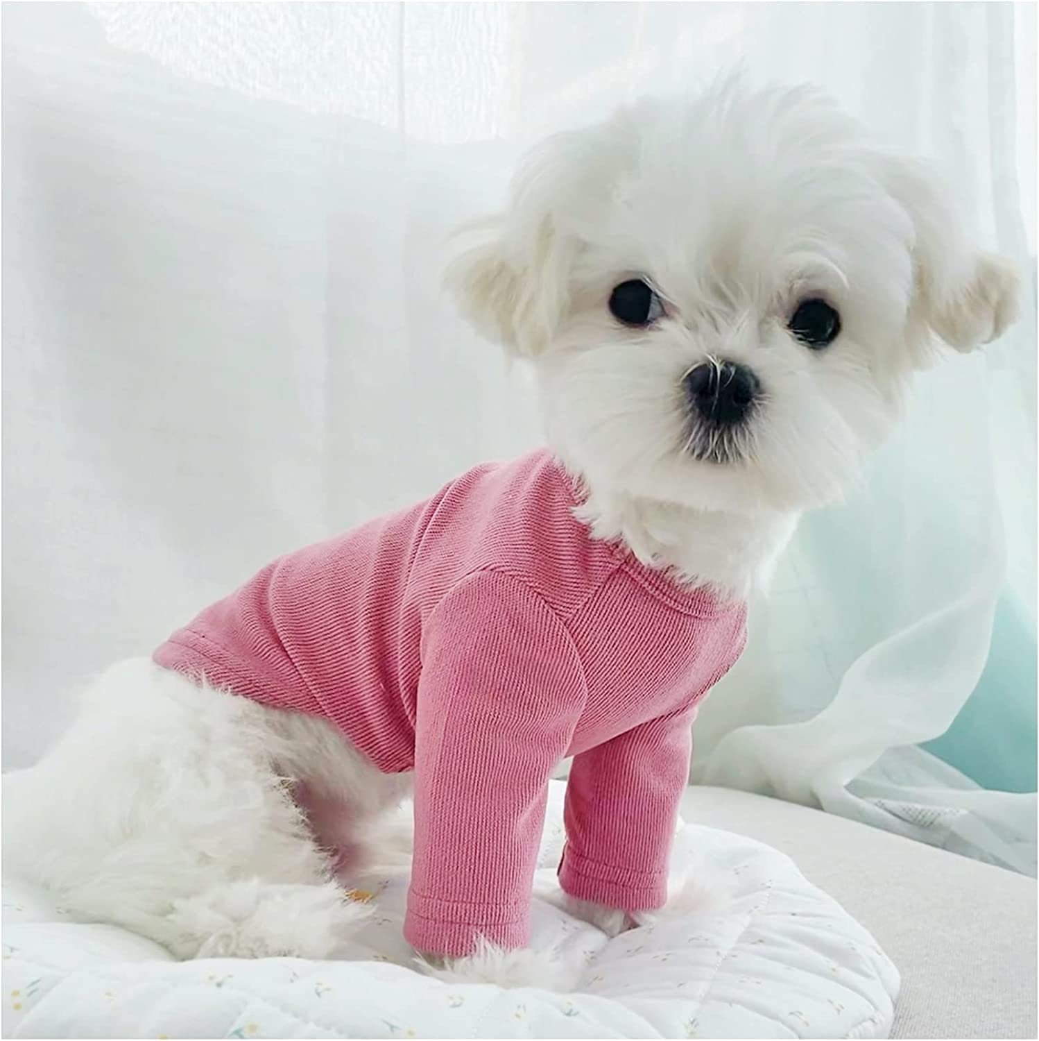 Loyanyy Dog Shirts for Small OFFicial shop Pupp Cotton Pure Sweatshirt Max 45% OFF