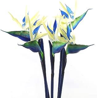 blue bird of paradise flower