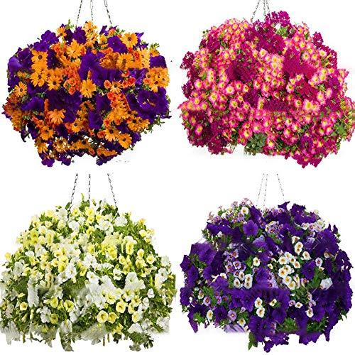 100 Unids/pack Semillas de Flor de Morning Glory Semillas de Piretroides Hermosas Semillas de Flores Perennes Semillas de Flores para Jardín de DIY - Blanco
