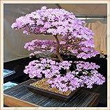 Semi di Sakura giapponese dell'albero dei bonsai.Rari fiori di ciliegio giapponese Semi di fiori in bonsai, rosa Prunus Serrulata 15 semi/confezione