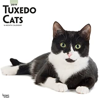 Tuxedo Cats 2019 12 x 12 Inch Monthly Square Wall Calendar, Animals Cats (Multilingual Edition)