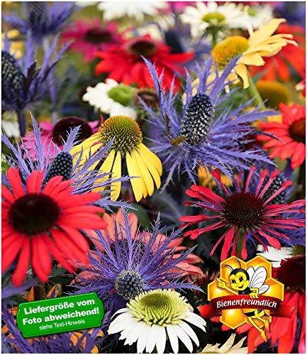 BALDUR-Garten Butterfly-Mix
