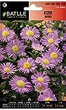 Semillas de Flores - Aster Alpino - Batlle