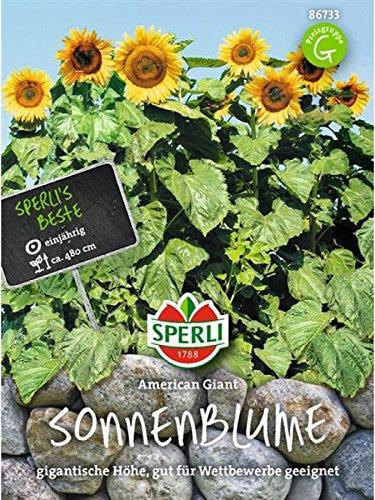 Sperli-Samen Sonnenblume American Giant