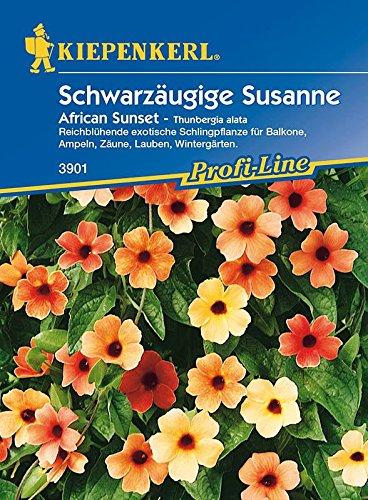 Schwarzäugige Susanne: African Sunset, Thunbergia alata - 1 Portion