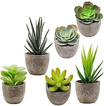 Best small decorative plants Reviews