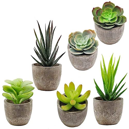 Small Potted Plant Amazon Com