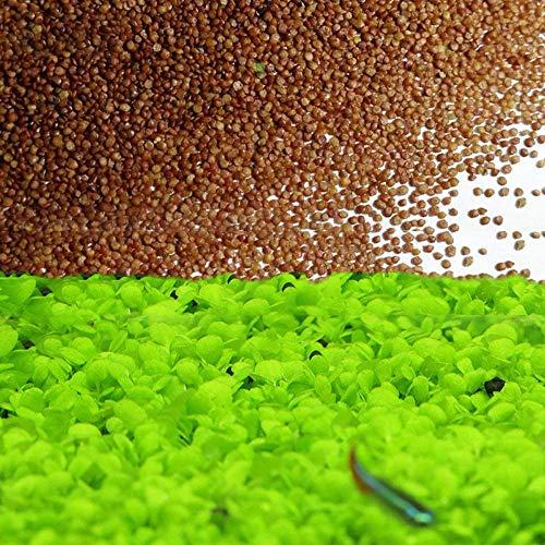 Love Grass Aquarium Grass Plants Seeds 10g About 5000+ Aquatic Leaf Carpet Water...