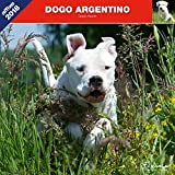DOGUE D'ARGENTINE 2018 - CALENDRIER AFFIXE ( DOGO ARGENTINO)