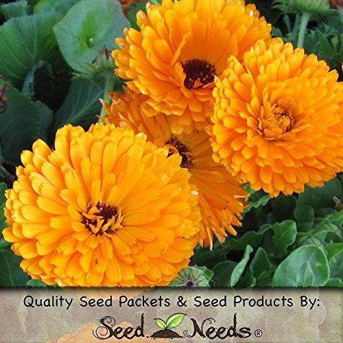 Paquet de 500 graines, balles améliorée orange Calendula (Calendula officinalis)