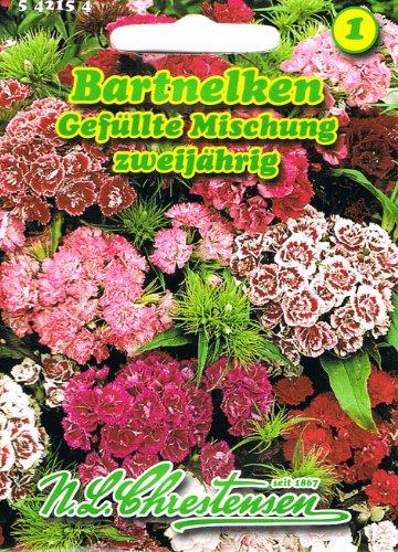 Dianthus barbartus, Bartnelken, Gefüllte Mischung, Büschelnelken zweijährig
