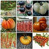 90 semi pomodoro in 9 varietà rare e ricche di sostante nutritive, collezione 3: 10 pomodoro gigante italiano, 10 ciliegino nero,10 gigante bianco,10 cuor di bue, 10 piennelo del vesuvio,10 tomato giant,10 datterino,10 big rainbow,10 cerise