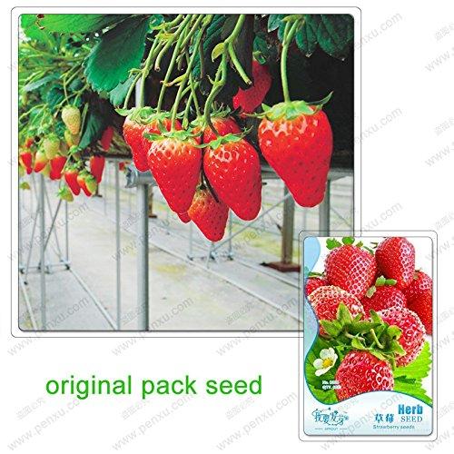 60 graines/Pack, fraises, fruits graines balcon fruits fraises, graines douces fraises, fruits verts Potted
