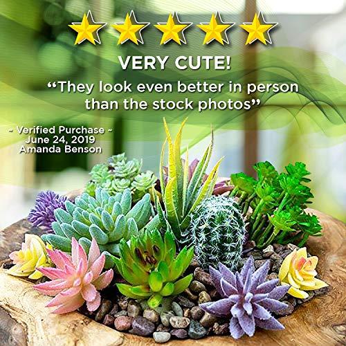 Greenadine Nutrition Artificial Succulent Plants-18 Pack
