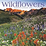 Wildflowers 2020 Wall Calendar
