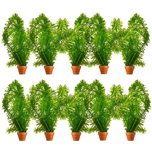 Wasserpest - Winterhart - Bund - 10 Stück - Sauerstoffpflanzen für den Teich oder Aquarium - Wasserreinigende Wasserpflanzen - Van der Velde Waterplanten