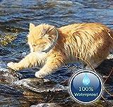 IMG-1 prozadalan collare antipulci per gatti