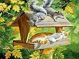 Peinture de diamant 5d Écureuil chat Loisirs créatifs Peinture par numéro, Tête de mort en strass à broder au point de croix Arts Travaux manuels Pour toile Décoration murale 40x50cm