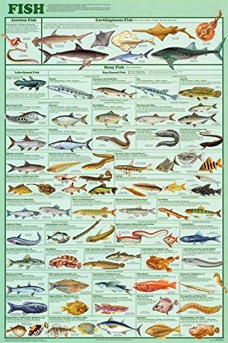 Laminiertes Poster mit Fischarten, Bildungs-Diagramm, wissenschaftliches Sealife-Druck, 61 x 91 cm