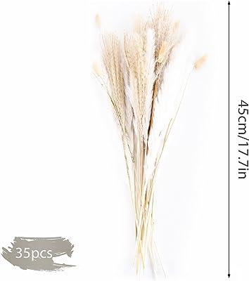 FORMIZON Herbe de la Pampa, Pampa Fleur Bouquet de Fleurs Sechees pour Vases Lot de 35, Plume de Phragmites, Bohême Décoration Chambre Maison Salon Fleurs Séchées