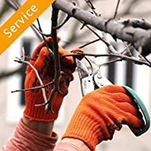 Tree Trimming or Pruning