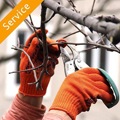 Tree Trimming or Pruning - 1 Tree