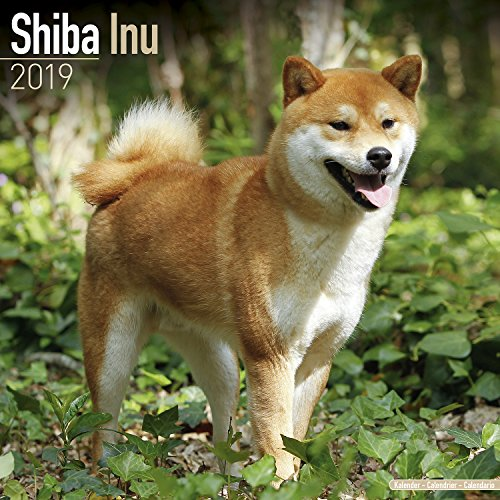 Shiba Inu Calendar 2019