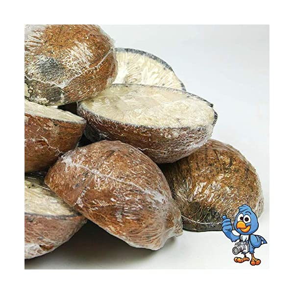 BusyBeaks Suet Filled Coconut Halves | Premium Wild Bird Food | Protein-Rich, High Energy Feed | Sunflower Seeds and Cereal Oat | Healthy & Strong Development for Birds | Year-Round Feeding