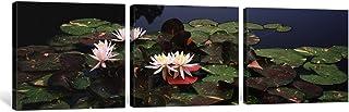iCanvasART 3 Piece Water lilies in a pond, Sunken Garden, Olbrich Botanical Gardens, Madison, Wisconsin, USA Canvas Print ...