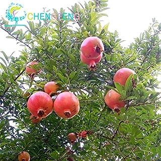 20pcs / bag semillas de granada Mini Bonsai Semillas de Plantas deliciosa de la fruta grande y dulces para jardín Mira las Plantas del brote del 95%