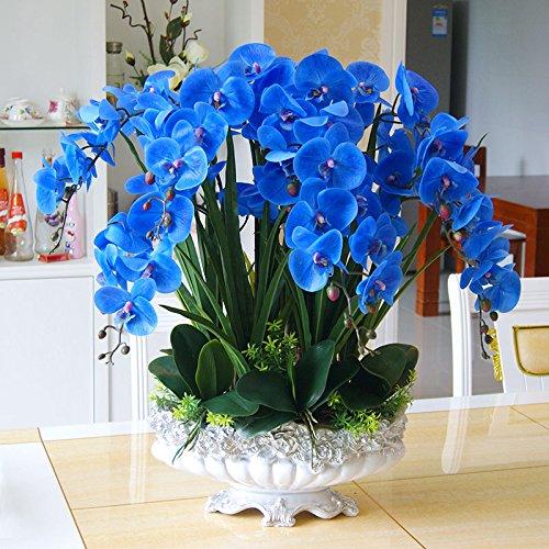 20 Stück blauer Schmetterling Perennial Phalaenopsis-Orchideen-Blumensamen-DIY Hausgarten-Anlagen