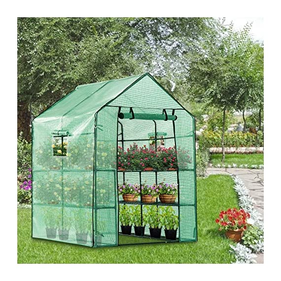 Vivosun 57x57x77-inch mini walk in green house with window and anchor plant garden hot house 2 tiers 8 shelves 3 multi-shelves, large space- crafted with 8 wired shelves, overall dimension:57x57x77-inch, our vivosun green house is large enough for starting seed, sprouting young plants, blooming flowers and cultivating fresh vegetables; 3 tiers and different height between each shelf provide a possibility to grow both small and large plants side by side roll-up entrance & windows- zippered roll-up entrance at the front provides an easily access to the greenhouse and a bigger operating space; 2 side windows bring a better air circulation of the green house, even if in hot weather, your lovely plants can breath fresh air; and the custom meshes on the window effectively isolate the pests from harming plants high-quality & long life time pe cover- our vivosun greenhouse is double-stranded edge banding, making the cover more tough and more durable; thanks to the anti-cold agent added in the cover, its lifetime is 3 months more than usual cover; in addition, our high-quality pe cover can prevent the harm from uv and bad weather but offering the best solar performance, which will nourish your plants very well
