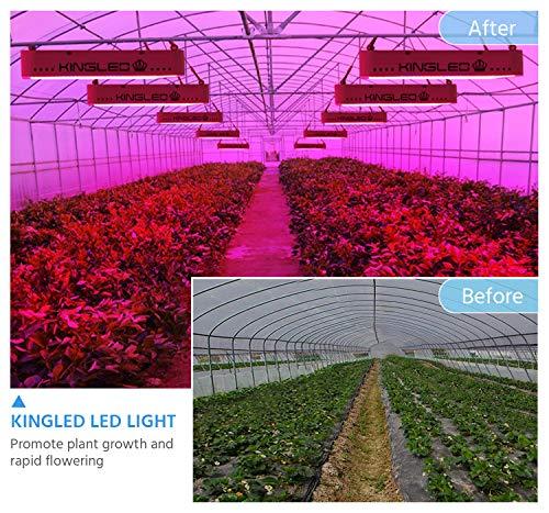 King Plus 600W LED Grow Light