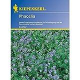 Kiepenkerl, Phacelia Lizette, 50 g