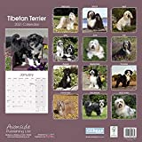 Tibetan TERRIER DOG CALENDAR 2021 SQUARE (30CM X 30CM) UK WALL